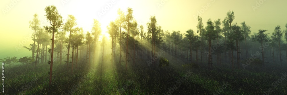 Forest in the morning in a fog in the sun, trees in a haze of light, glowing fog among the trees