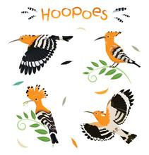 Hoopoe Birds Pattern