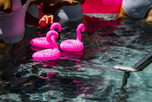 3 Pink Flamingo-shaped Floatie...