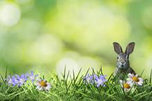 Cute Easter Bunny In Green Flower Meadow