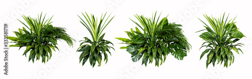 Green leaves of tropical plants bush (Monstera, palm, rubber plant, pine, bird's nest fern) floral arrangement indoors garden nature backdrop isolated on white background thailand,clipping path inclu