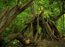 Hut Made Of Branches In The Fo...