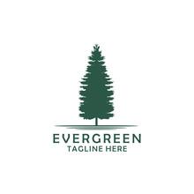 Evergreen, Pines, Spruce, Ceda...