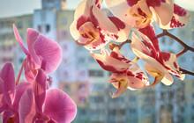 Indoor Orchids That Bloom In T...