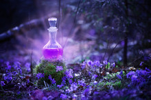 Magic Potion In Bottle In  Fairy Forest