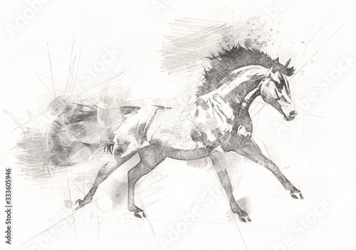Fototapeta freehand horse head pencil drawing obraz