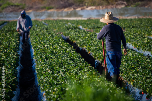 Canvas-taulu Farm worker in straw hat with shovel looking at another farm worker in a strawbe