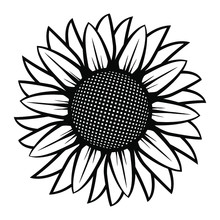Sunflower Illustration In Black And White On Isolated Background