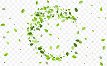 Lime Leaves Vector Pattern. Mi...