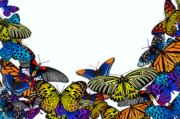 Beautiful flying butterflies on white background