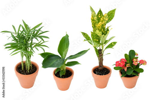 Photo Beautiful mix small house plants palm, bananb, croton in brown and black plastic pot in different type on isolated white and clipping path