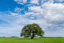 ハルニレの木と大空
