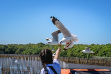 Tourists Are Feeding The Seagulls Over The Sea In A Blue Background In Samut Prakan, Thailand