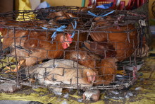 Caged Chickens In Wet Market, ...