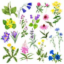 Watercolor Field Flowers Set, ...