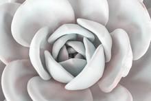 Roses Stone Cactus Texture Blo...