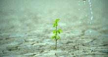 Green Plants Grow In Dry Groun...