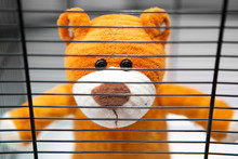 A Teddy Bear Behind The Bars O...
