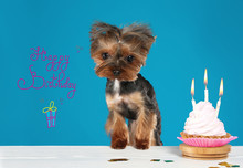 Text Happy Birthday, Yorkshire Terrier Dog And Delicious Cupcake On Blue Background