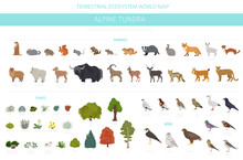 Apine Tundra Biome, Natural Region Infographic. Terrestrial Ecosystem World Map. Animals, Birds And Plants Design Set