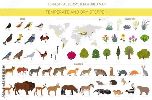 Fotografía Temperate and dry steppe biome, natural region infographic