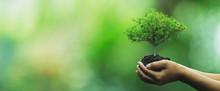 Tree Planting On Volunteer Fam...
