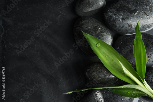 Obraz Stones and bamboo sprout in water on dark background, flat lay with space for text. Zen lifestyle - fototapety do salonu