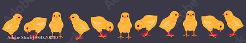 Valokuva Easter Baby Chicks