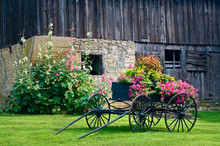An Old Weathered Barn In The Midwest Countryside Forms  A Backdrop For An Antique Wagon Filled With Flowers.