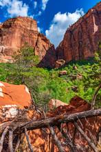 Dead Tree In Zion Canyon Seen ...