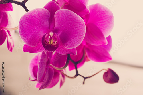 Beautiful purple  Orchid flowers on a branch hanging in the air - 333737784