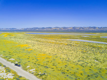 Aerial View Of The Beautiful Yellow Goldifelds Blossom With Soda Lake