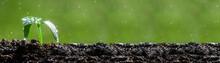Rising Young Fresh Plant Growi...