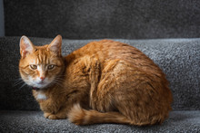 A Beautiful Ginger Tabby Tom Cat Sat On The Staircase Near A Window