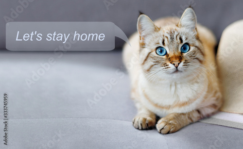 Fototapeta Stay at home social media campaign for coronavirus prevention. Concept with  portrait of ginger  cat obraz