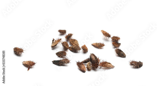 Pile dry seeds burdock, thistle isolated on white background Canvas Print