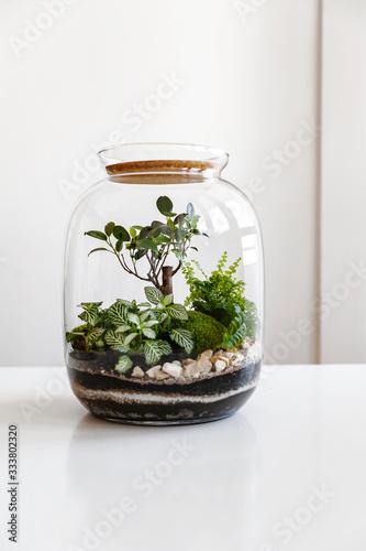 Obraz na płótnie Small decoration plants in a glass bottle/garden terrarium bottle/ forest in a jar