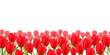 チューリップ 花 春 背景