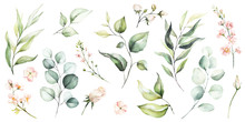 Watercolour Floral Illustratio...