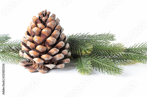 pinecone with pine branches isolted on white background Wallpaper Mural