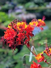Portrait Of An Orange Red Flower