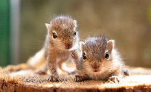 Baby Squirrels Looking Out For Their Mother
