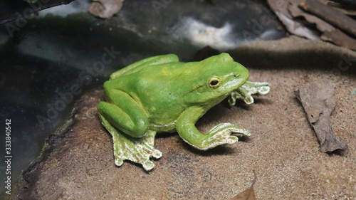 Photo A green toad sitting near the pond.