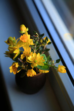 A Small Clay Vase With Primroses - Yellow Daffodil, Scílla, Cáltha Palústris, Puschkinia Scilloides, And Sage Leaves On The Windowsill
