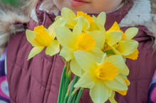 Mothers Day. A Bouquet Of Daff...