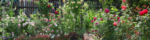Fototapeta Beautiful panorama view of a cottage garden with lots of roses and other perennial plants in bright sunshine obraz