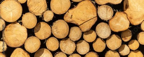 pile of harvested wood logs Tableau sur Toile