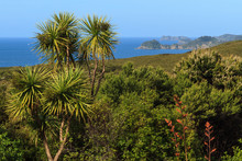 The Bay Of Islands, New Zealand. Native Forest Growing On The Coastal Cliffs Near The Town Of Russell