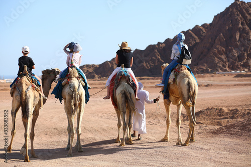 People riding camels in the egypt desert. Rear view Wallpaper Mural