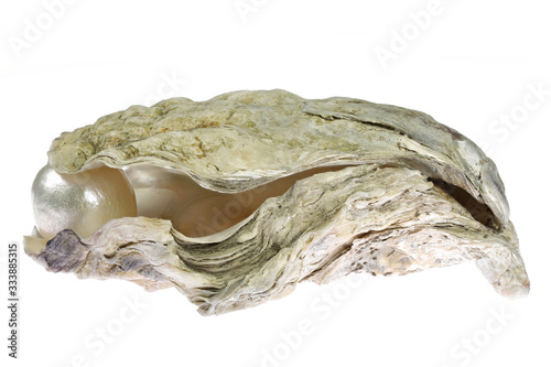 pearl embedded in oyster isolated on white background Fototapet